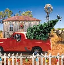 Ute with a Christmas tree and Australian cattle dog on outback property