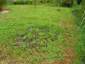 Failed Sewage Systems #sewage #damage http://india.nef2.com/failed-sewage-systems-sewage-damage/  # Failed Sewage System Insurance Claims The WTE Claims Team can often obtain the entire cost of your new sewage system from your insurers. Most people have no idea that their failed sewage treatment system could be covered under their Buildings Insurance Policy. Even if the septic tank or sewage treatment plant is a long way from the building, it is often still covered under your policy. If this…
