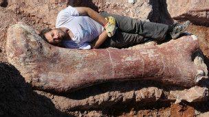Ossos do maior dinossauro que já descoberto são encontrado na Argentina - BBC Brasil - Notícias