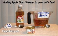 Playful Kitty | Holistic Healing for Cats: Apple Cider Vinegar | http://www.playfulkitty.net 1/4 t. ACV + 1 t chickenStock or Tuna Water. + wet cat food: helps with UTI