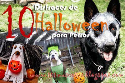 101 mascotas | Disfraces para perros | como hacer Disfraces para perros: 10 Disfraces de Halloween para perros