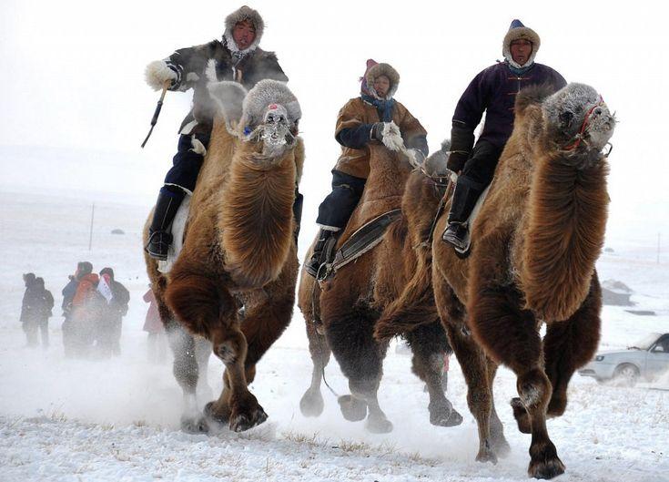 Camel races at the winter Naadam festival in Hulun Buir - Diane Doirdon