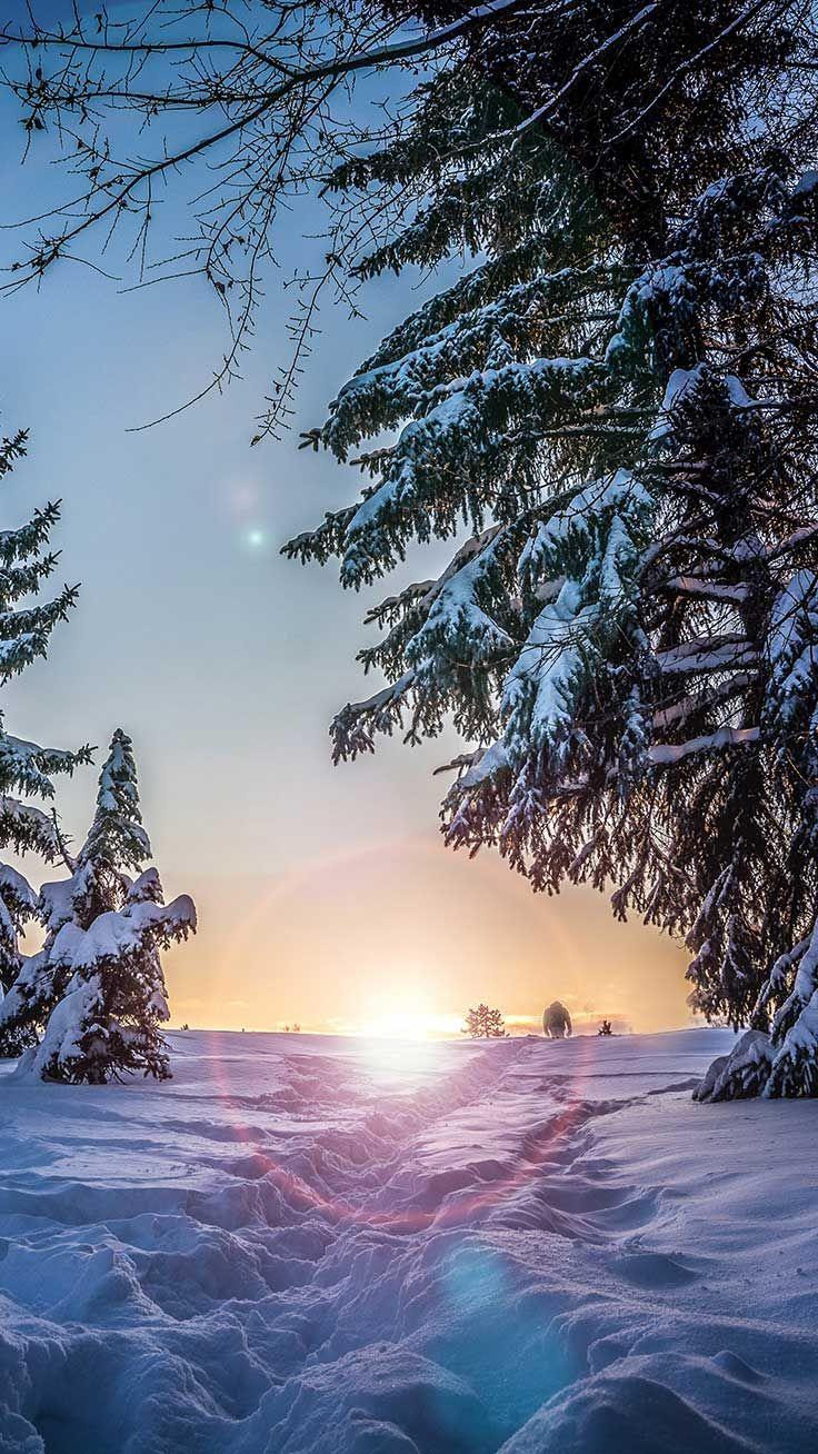 10 X Winter Wonderland Iphone Xs Wallpapers Fondos De