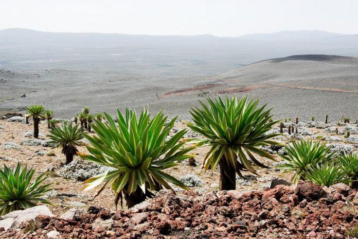 Bale Mountains Nationaolpark, Äthiopien