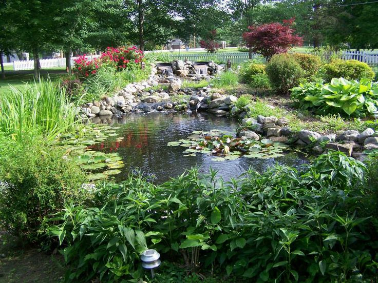 Beautiful pond pond fish beautiful tetrapond have for Local pond stores