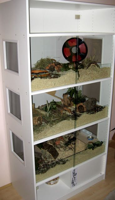 Near-natural enclosure hamster: A PAX for Dinis