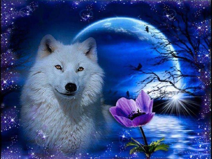 Wölfe Fantasy Bilder