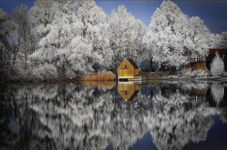 """ADF on Twitter: """"Snow was falling, so much like stars filling the dark trees. Mary Oliver"""