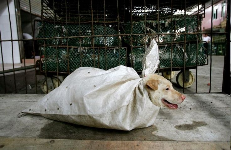 Posting for & on behalf of Tony Zadel...Please help & sign all the petitions, thank you! This is a original picture of dog wrapped for sale at an gruesome barbaric market in the Baiyun dist...