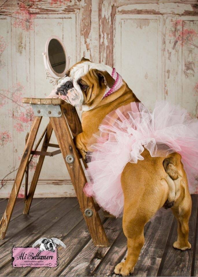 Pretty in Pink Bulldog