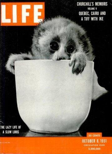 LIFE October 8,1951 Slow Loris / Public Morals / Baseball / Making Marines