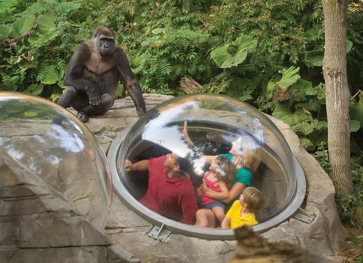 Omaha's Henry Doorly Zoo, Omaha