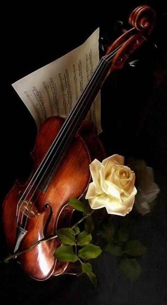 Violu00edn u266au266bu2665.....La mu00fasica es el corazu00f3n de la vida. Por ella habla el amor; sin ella no hay bien posible y con ella todo es hermoso. Franz Liszt