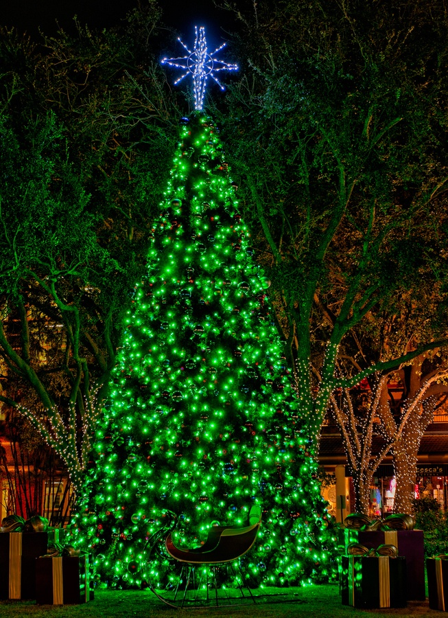 hyde park village christmas tree hyde park village tampa - Christmas Lights Tampa