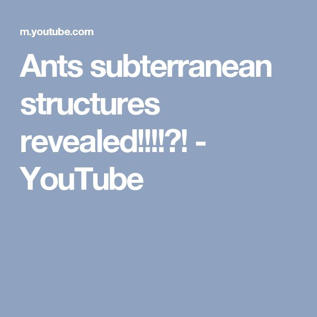Ants subterranean structures revealed!!!!?! - YouTube