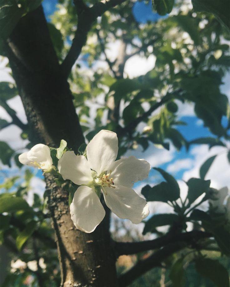 Столько красоты вокруг �� #моицветочныезаметки #люблюцветы #люблювесну #весна #цветение #инстаграмцветов #flowerstagram #flowerslovers #blossom http://gelinshop.com/ipost/1523948517088805599/?code=BUmJxohD8Lf
