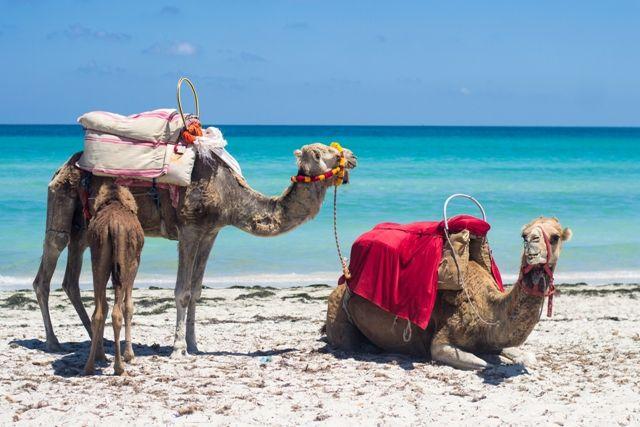 Wat absoluut een aanrader is, is een 2-daagse sahara bus & jeep safari. Ontdek het veelzijdige landschap van Tunesië tijdens deze tocht. Tijdens deze tour wordt o.a. een zoek gebracht aan het amfitheater van El Djem (bekend van de film The Gladiator). Vervolgens gaat de reis door naar Matmata waar de berbers nog in holen wonen. En breng dan daarna een bezoek aan de bergoase Chebika en Tamerza (zwemmen onder de waterval) en spot fata morgana's.
