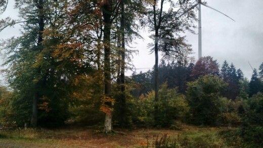 Bosque alemán2