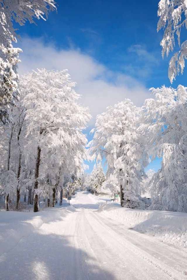 Sunny Winter Day Winter Scenery Winter Landscape Winter Landscape Photography