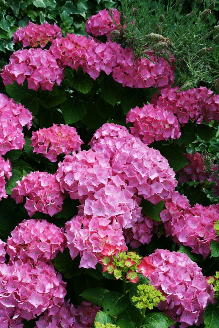 Bright pink flowers (coco rose diaries)