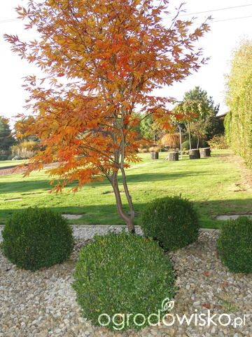 Ogrodomania Oli - strona 149 - Forum ogrodnicze - Ogrodowisko