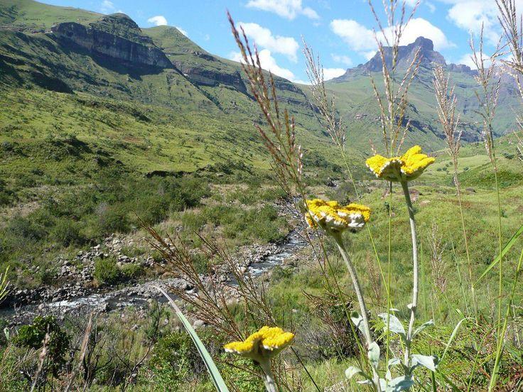 南アフリカ 天空の王国レソト ドラケンスバーグ山脈は大湿原もある