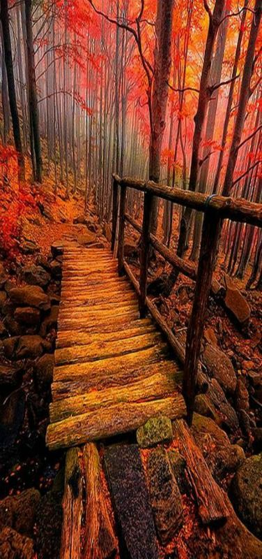 Breathe deeply, and smell the damp, musty leaves, aged wood, and the briskness in the air, and feel the slick wood beneath your feet, worn from thousands who've gone before.   Forest Bridge, Italy  Love is Ageless http://www.susanhaught.com