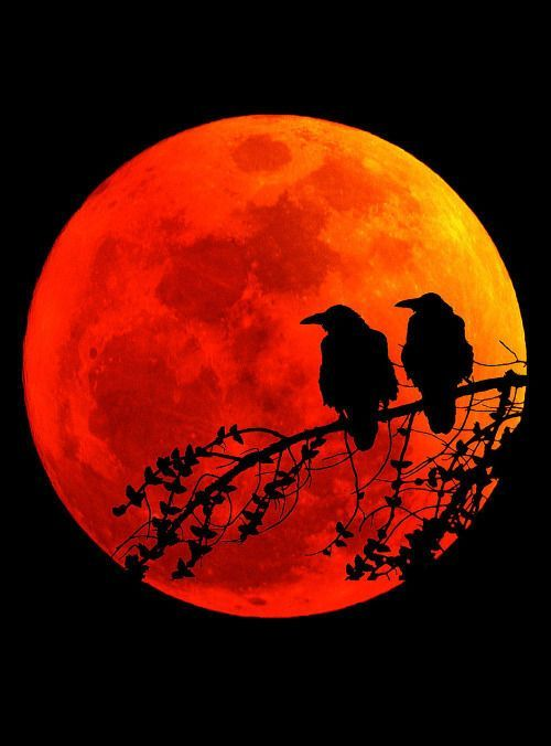 "deepsoulfury: "" Art Photography-Birds on red moo…"