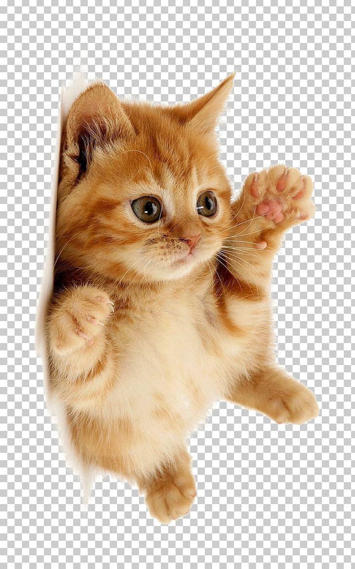 Cute Cat Png Animal Cat Clipart Cute Cute Clipart Cute Thing Cat Clipart Cute Cat Memes Tabby Kitten