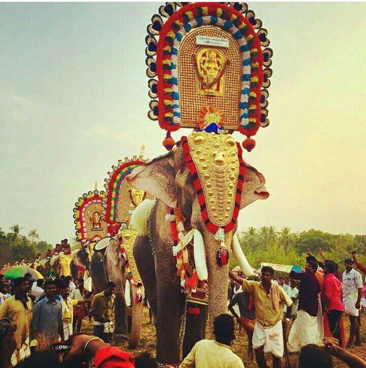 Pin By Mariana Meneses Manzano On Elefantes In 2020 Elephant
