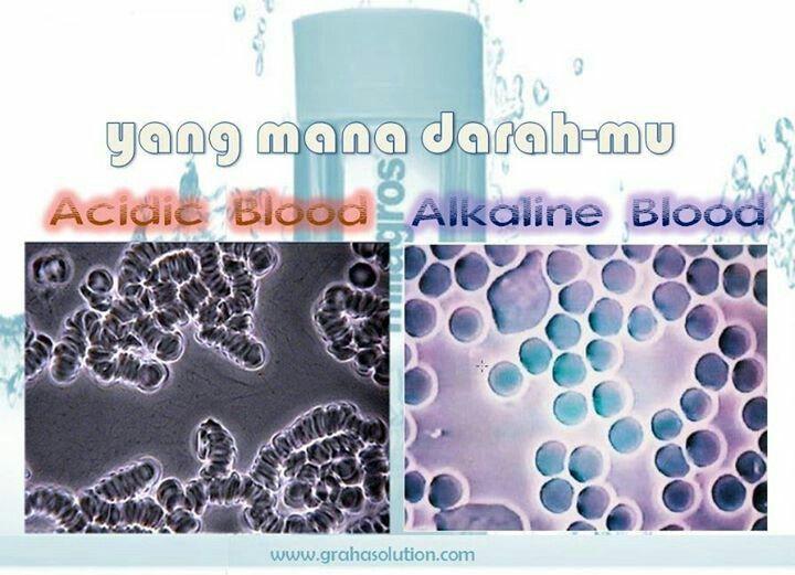 acidic or alkaline blood?
