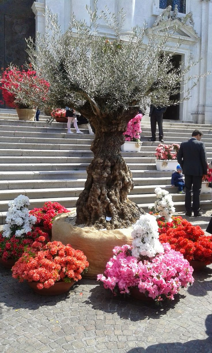 At a very well known Flowers Trade Show here close to a small village in Northern Italy   http://erbeitalianskincare.blogspot.it/2014/06/visiting-flowers-trade-show-taking.html