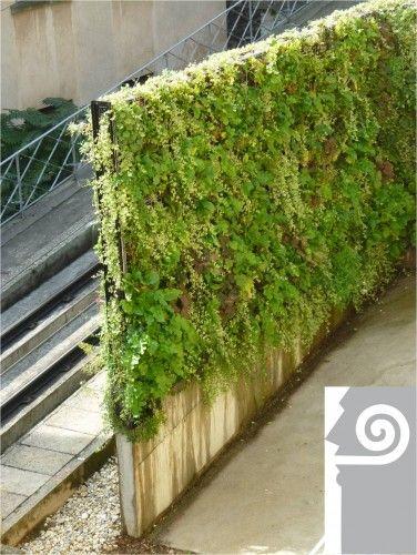 Mur végétalisé antibruit - Lauréat Décibel d'Argent 2011