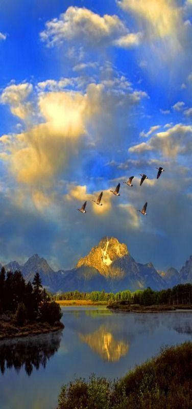 'Taking Flight' Canada Geese, #Grand Tetons National Park, Mount Moran, Oxbow Bend, USA