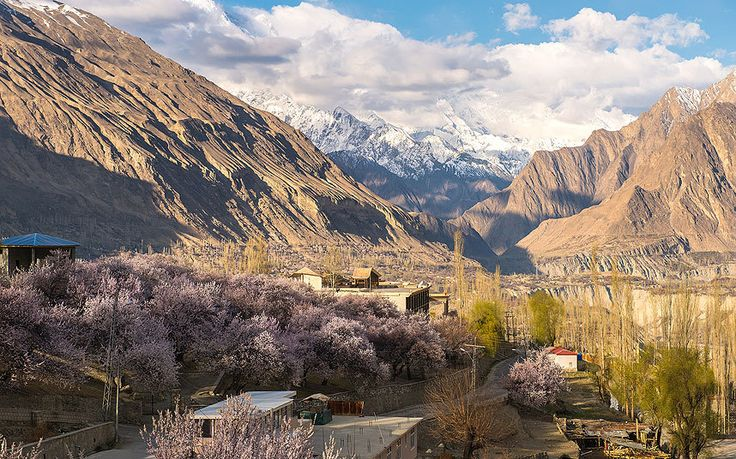 hunza-cherry-blossom, In spring time, the Hunza Valley, in Gilgit–Baltistan, blushes pink, as cherry and apricot trees unfurl their branches from the winter's cold. The scene may resemble an English meadow, but it is belied by the snowy slopes of the surrounding mountains, all of which reach more than 6,000 metres.