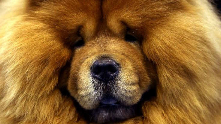 The National Dog Show is set for Thursday following the Macy's Thanksgiving Parade.