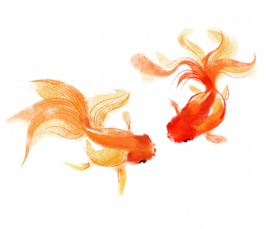 goldfish water color                                                                                                                                                                                 Plus