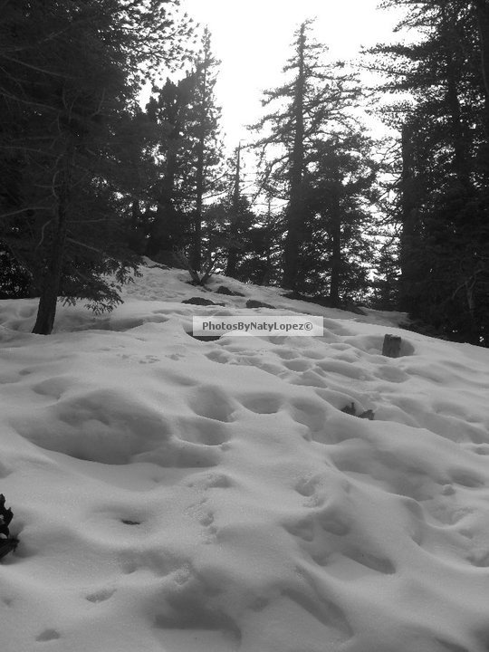 """""""Even in winter an isolated patch of snow has a special quality."""" -Andy Goldworthy (British Sculptor/Photographer)"""