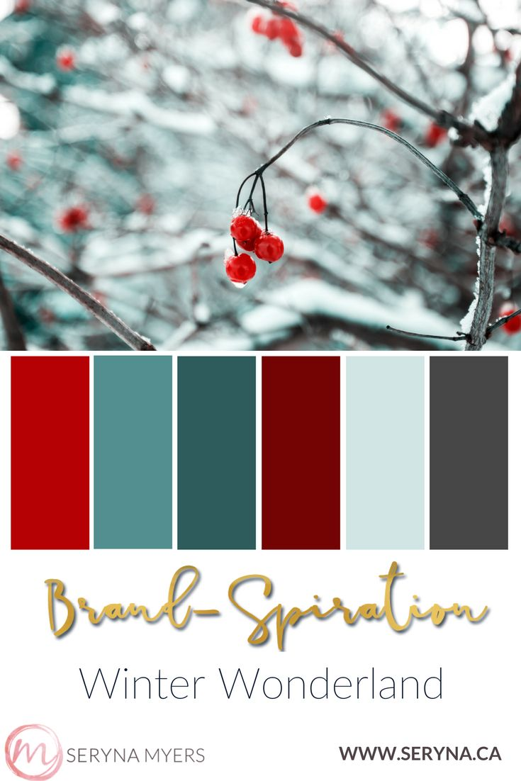 Beautiful berries on a snow covered tree. Teal and red in a beautiful winter palette that's both cool and rich.