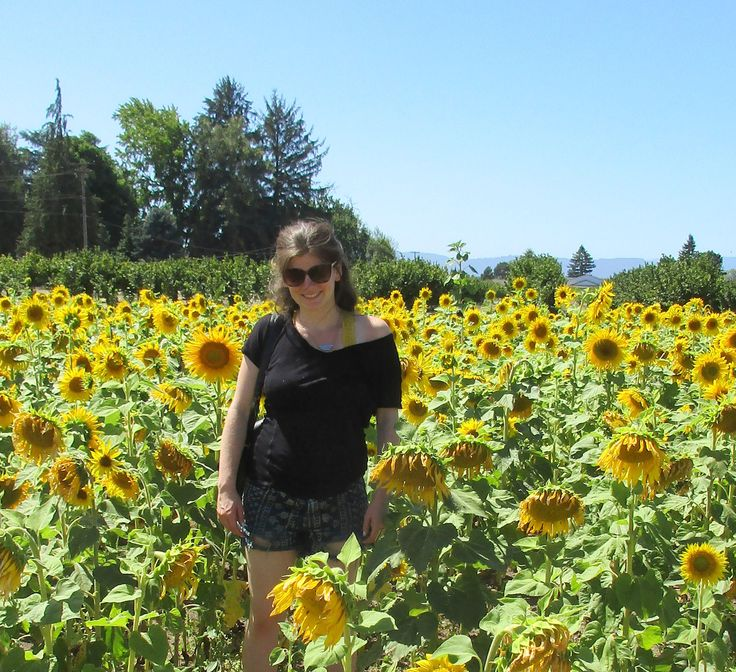 Sunflowers at Jossy Farms in Hillsboro, Oregon