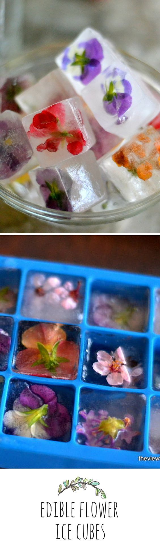 Edible Flower Ice Cubes: