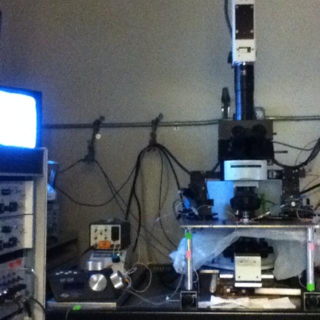 Electrophysiology - Wikipedia