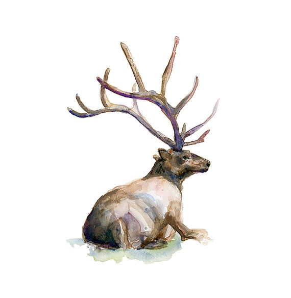 SIGNED and numbered giclee art print of a Deer with antlers    Find the original painting here: