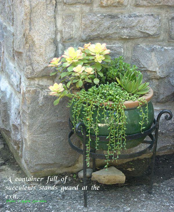 1000 images about cactus succulent container gardens on pinterest agaves succulent - Succulent container gardens debra lee baldwin ...