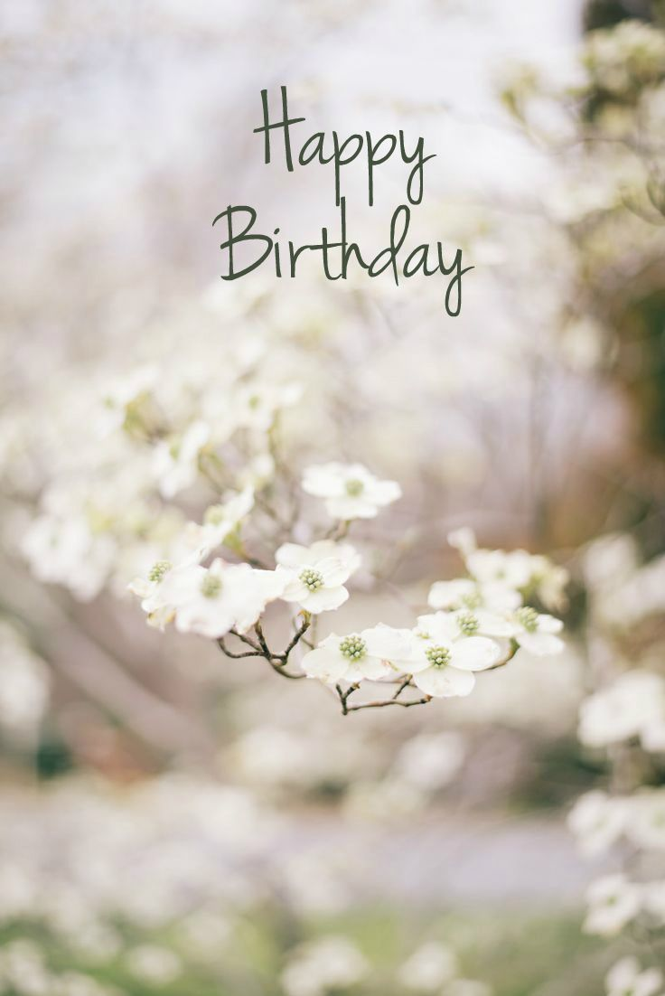 943 best wishing board images on pinterest happy birthday happy birthday wish flowers izmirmasajfo