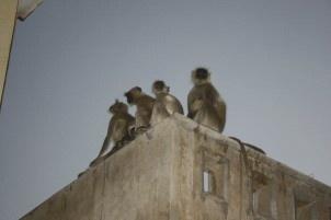 Lisarey Photography - Monkey See - Monkey Do.