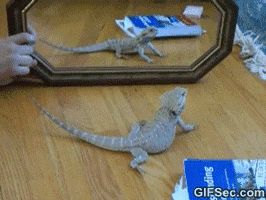 So funny! Mine gave itself stress marks doing this. I don't let him around mirrors much anymore...