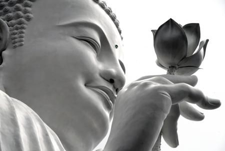 Lotus Flower Meaning- Buddhism