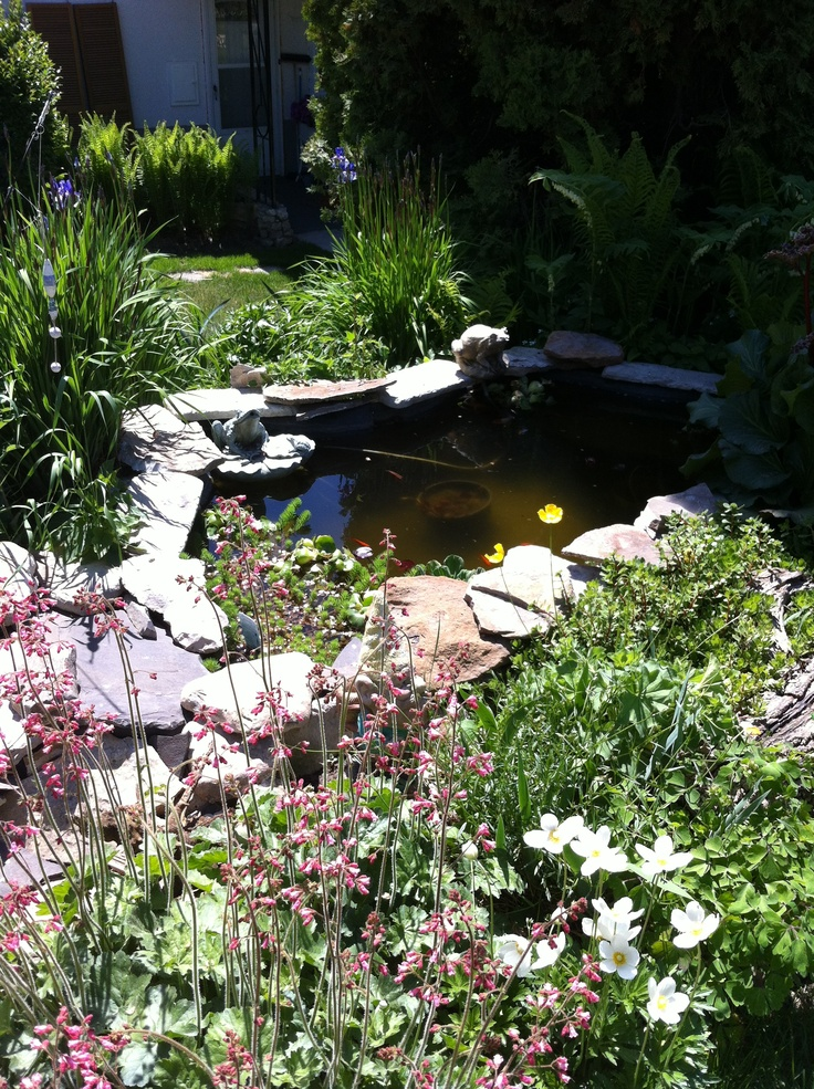 Fish Dying In Backyard Pond : pond outdoor water pretty ponds lakes buildapond net forward pond koi