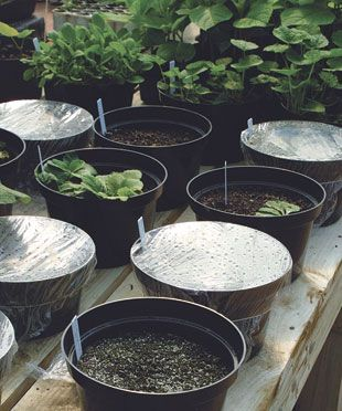 10 great seed-starting tips from the nursery manager at Monticello.